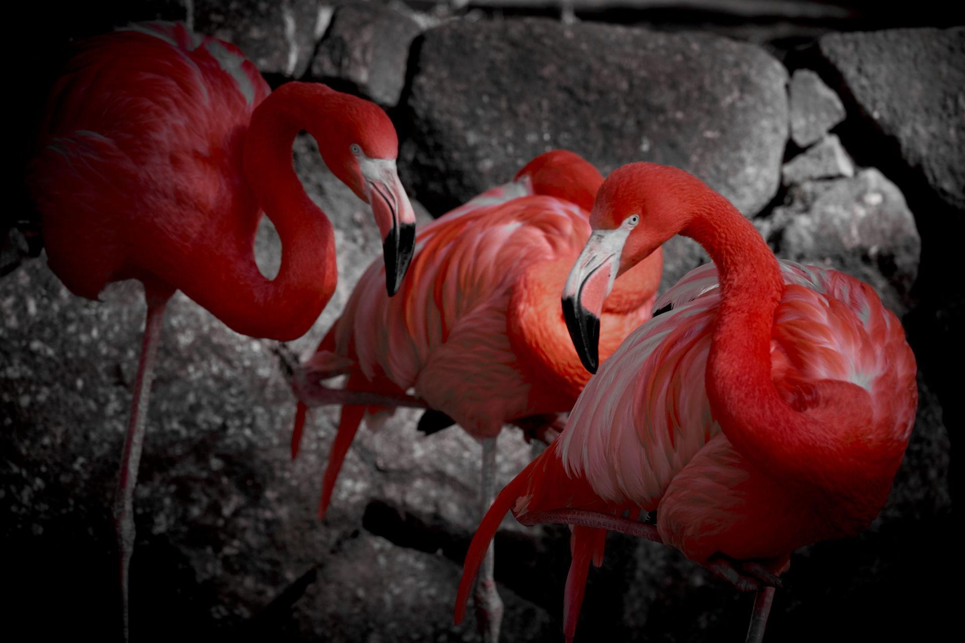 Flamingo looking me